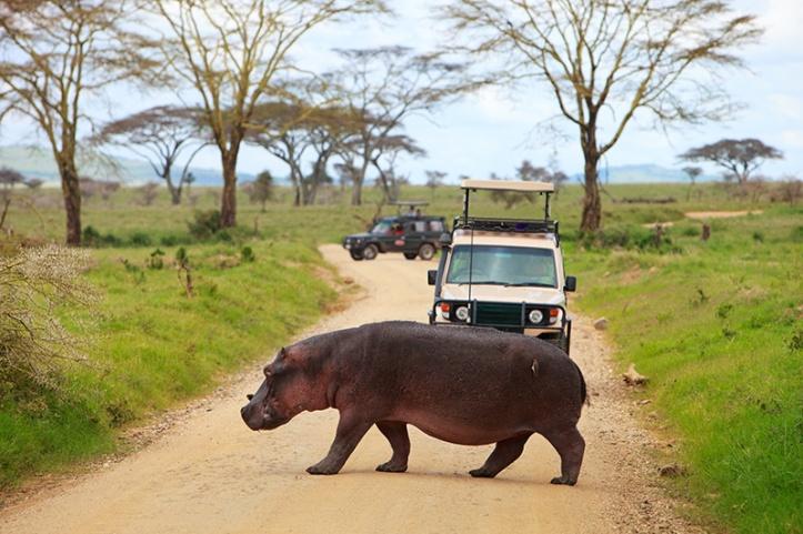nakuru-hippos
